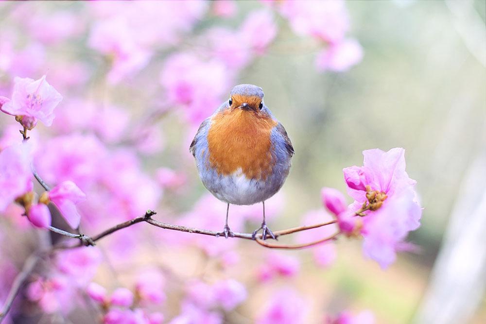 eye care for springtime
