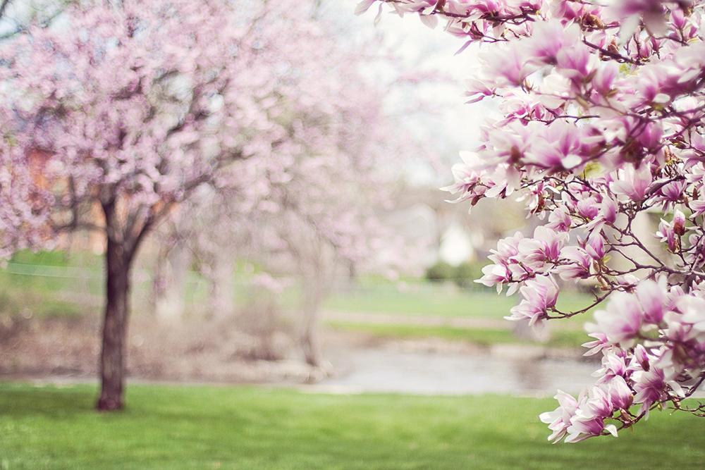 Springtime is Eye Allergy Season