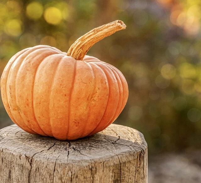 simply safe halloween